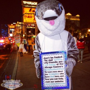 Meet our mascot, Banjo, one of the original Mojave Dolphins.